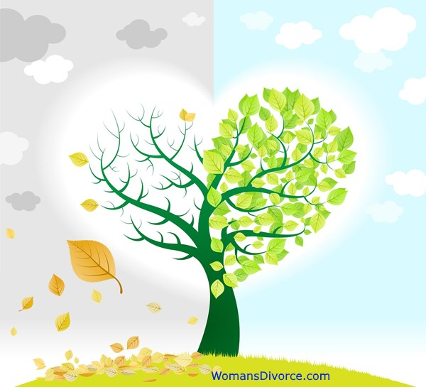Seasons and feelings change after divorce as illustrated by the leaves on a tree.