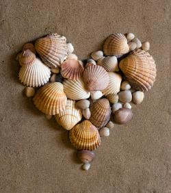 Heart of shells